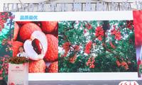"""""""高州荔枝""""成城市名片 文化节活动精彩纷呈"""