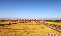 宁夏七大会场欢庆首个农民丰收节