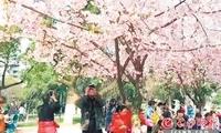 万紫千红春意闹 长沙进入一年最美赏花季