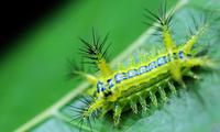 头一次听说,小时候最怕的虫子竟然可以吃?